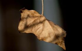 Hanging dead leaf