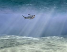 CG Shark