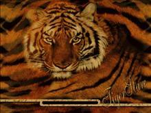 TigerStare
