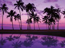 Shades of Purple - widescreen