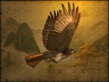 Hawk_wallpak