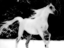Yer-Stallion