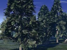Forrest Scene (Day)