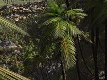 Paml valley