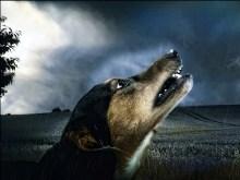 Storm Doggie