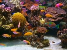 HD Aquarium 2