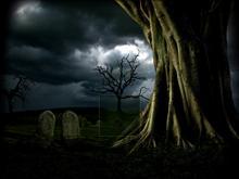 Grave Yard Tree