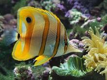 hd fish