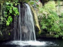 flowing waterfall pond