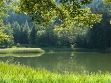 austria pond