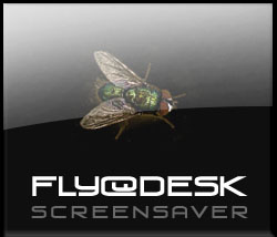 FlyOnMyDesk